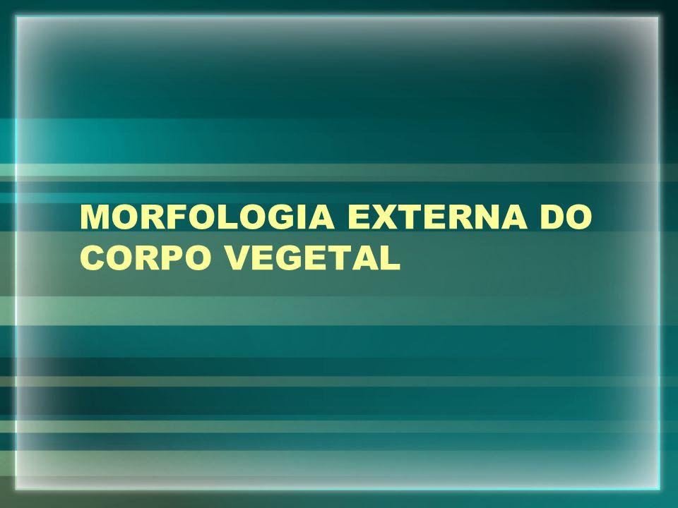 MORFOLOGIA EXTERNA DO CORPO VEGETAL