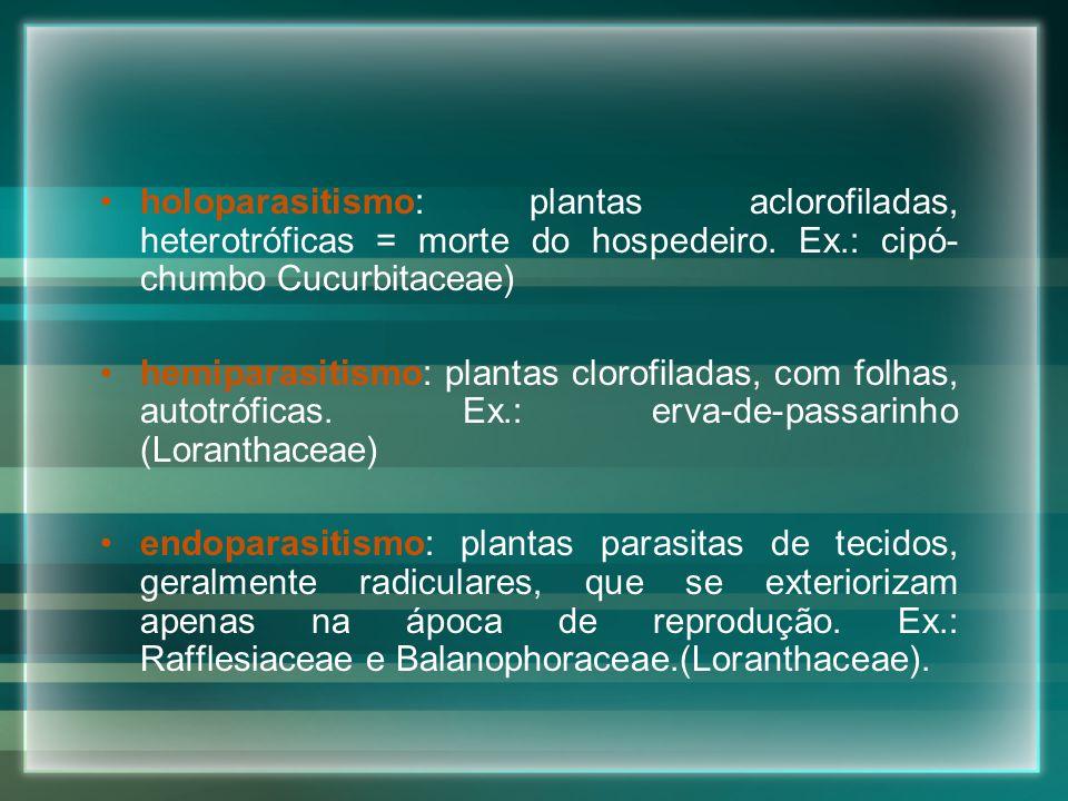 holoparasitismo: plantas aclorofiladas, heterotróficas = morte do hospedeiro. Ex.: cipó-chumbo Cucurbitaceae)