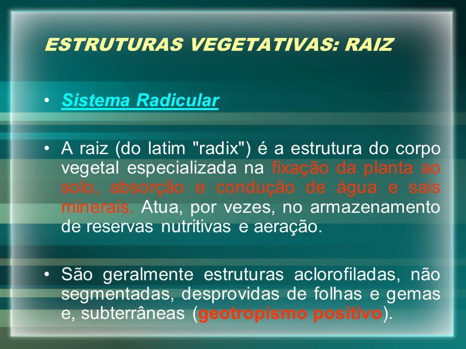 ESTRUTURAS VEGETATIVAS: RAIZ