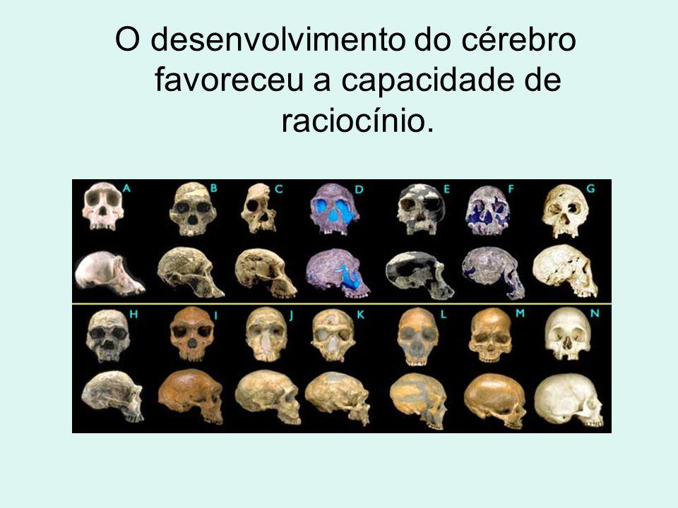 O desenvolvimento do cérebro favoreceu a capacidade de raciocínio.