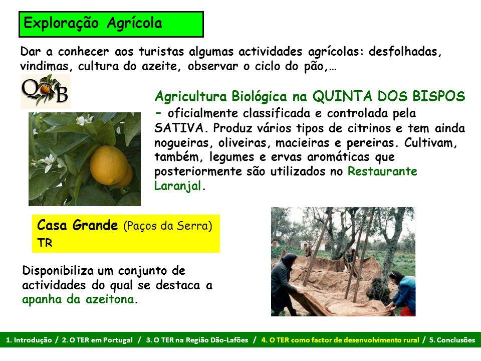 Exploração Agrícola Dar a conhecer aos turistas algumas actividades agrícolas: desfolhadas, vindimas, cultura do azeite, observar o ciclo do pão,…