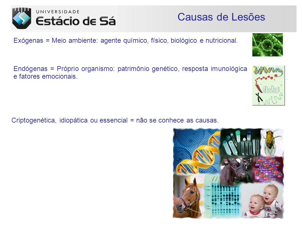 Causas de Lesões Exógenas = Meio ambiente: agente químico, físico, biológico e nutricional.