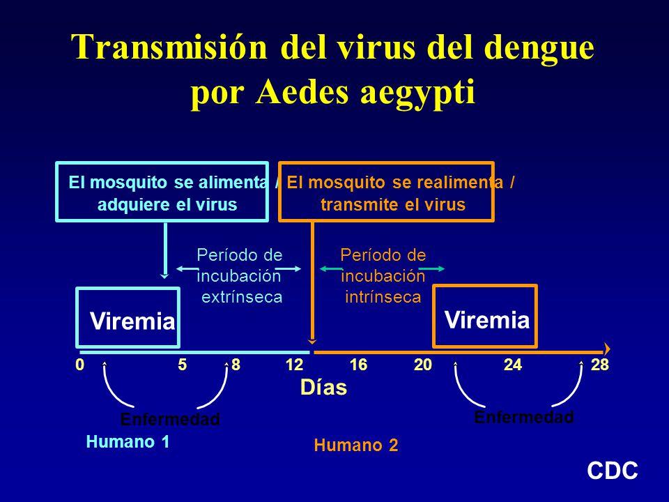 Transmisión del virus del dengue por Aedes aegypti