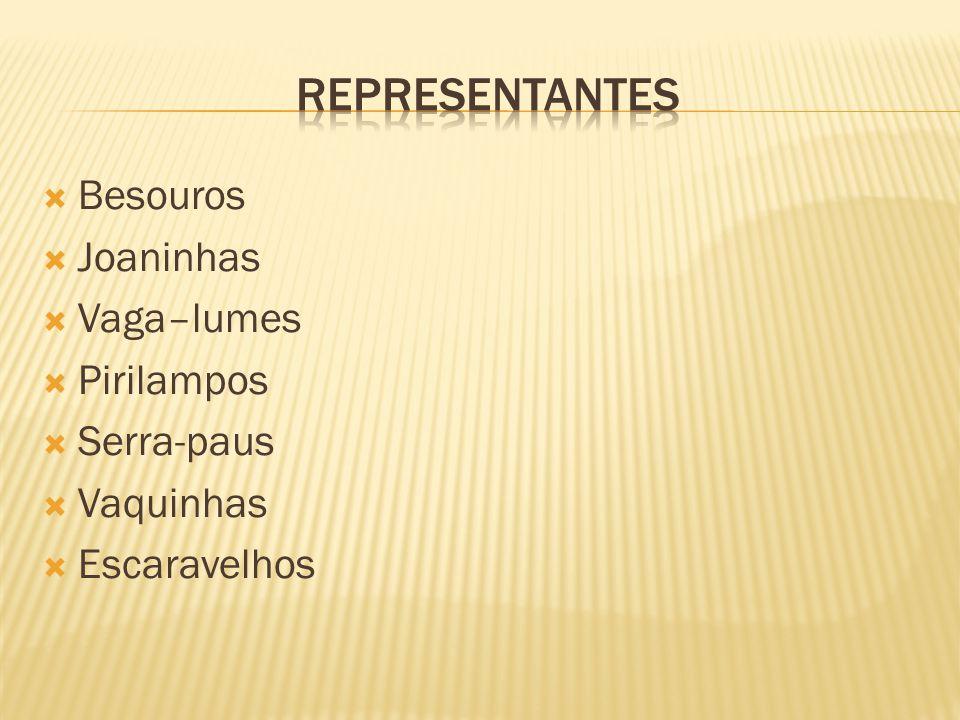 Representantes Besouros Joaninhas Vaga–lumes Pirilampos Serra-paus