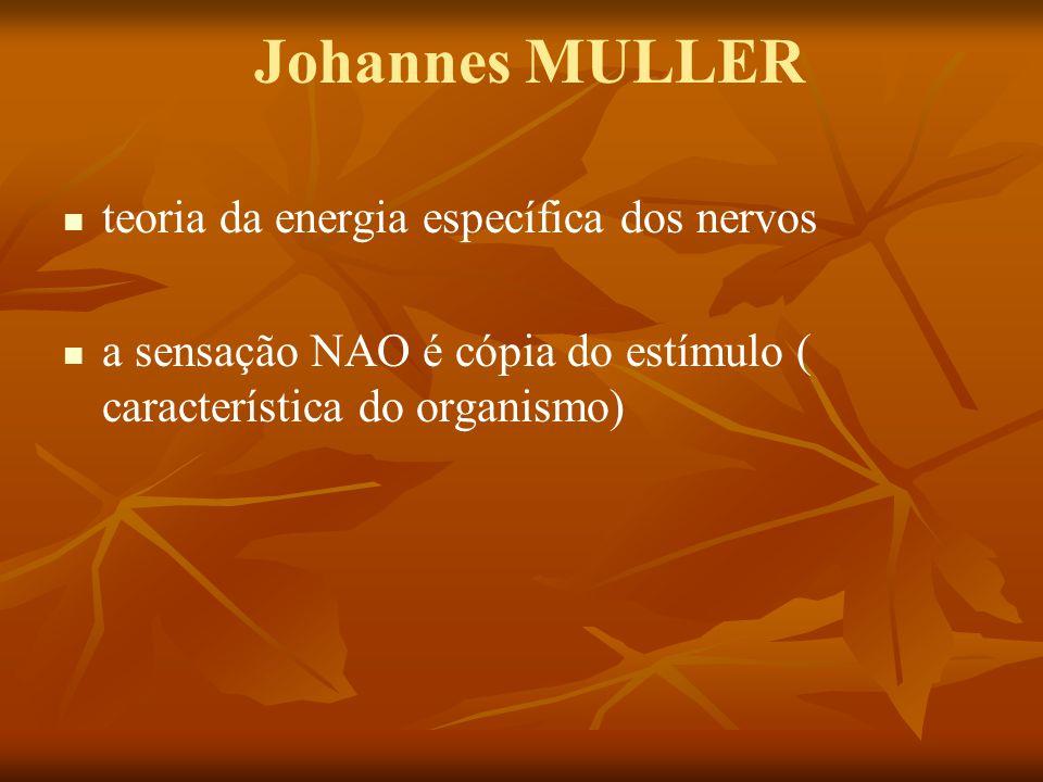 Johannes MULLER teoria da energia específica dos nervos