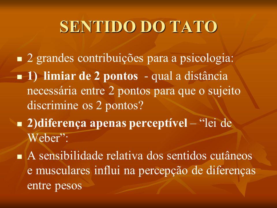SENTIDO DO TATO 2 grandes contribuições para a psicologia: