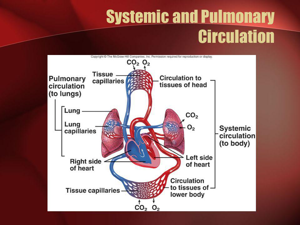 Systemic and Pulmonary Circulation