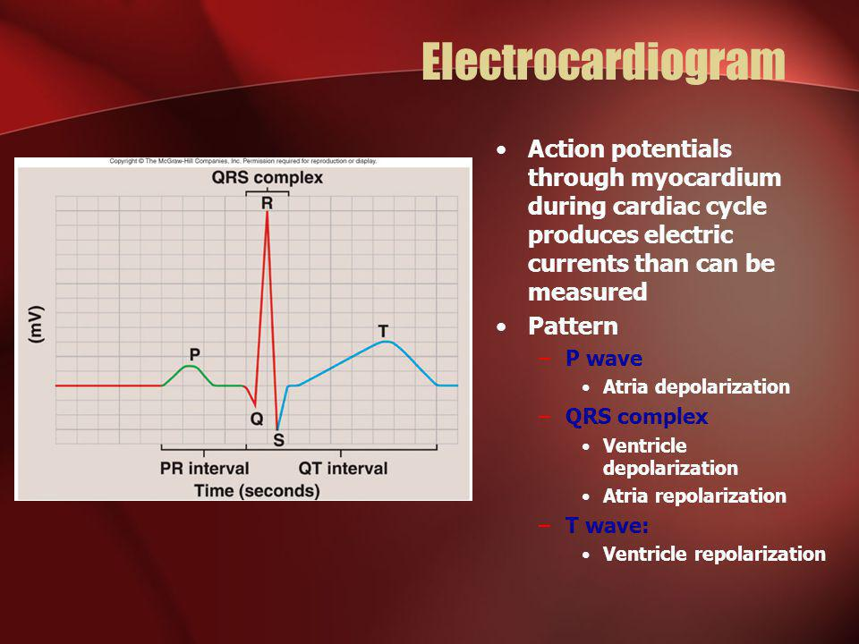 Electrocardiogram Action potentials through myocardium during cardiac cycle produces electric currents than can be measured.