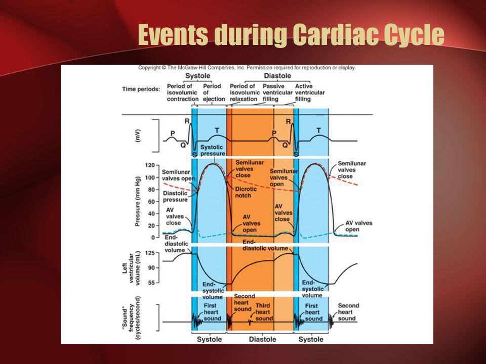 Events during Cardiac Cycle