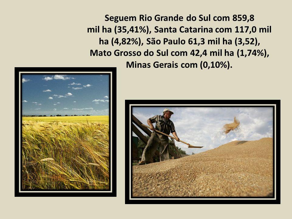 Seguem Rio Grande do Sul com 859,8 mil ha (35,41%), Santa Catarina com 117,0 mil ha (4,82%), São Paulo 61,3 mil ha (3,52), Mato Grosso do Sul com 42,4 mil ha (1,74%), Minas Gerais com (0,10%).
