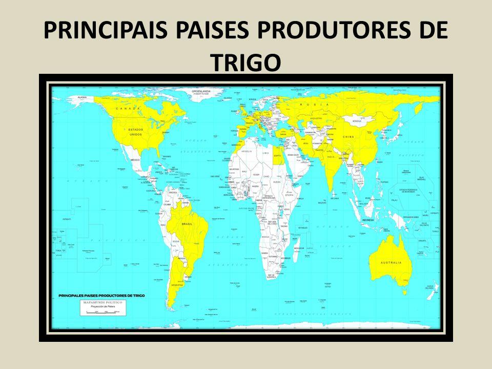 PRINCIPAIS PAISES PRODUTORES DE TRIGO