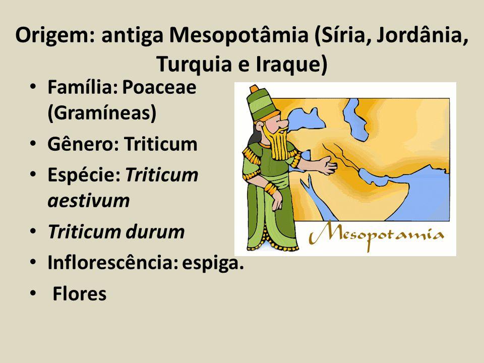 Origem: antiga Mesopotâmia (Síria, Jordânia, Turquia e Iraque)