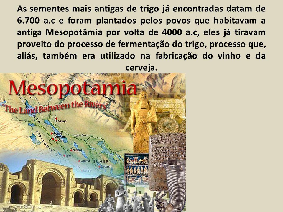 As sementes mais antigas de trigo já encontradas datam de 6. 700 a