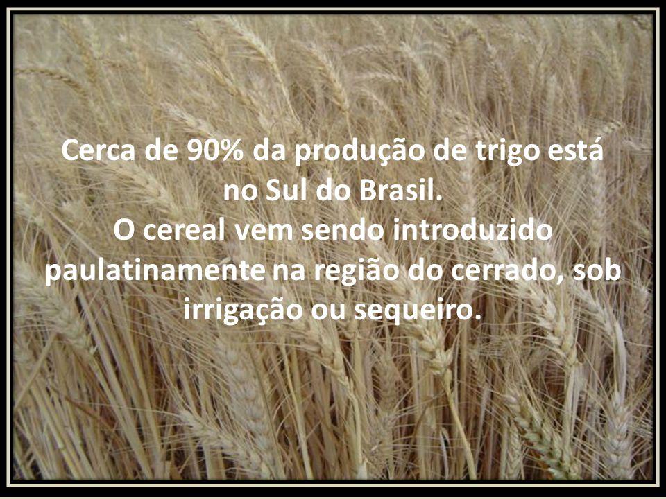 Cerca de 90% da produção de trigo está no Sul do Brasil