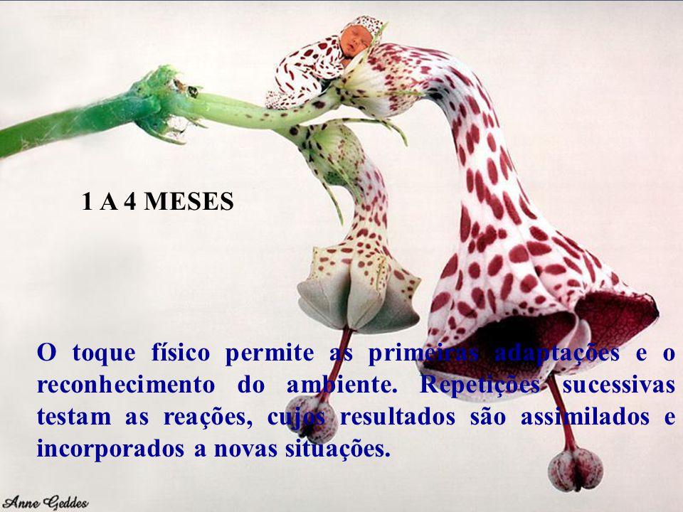 1 A 4 MESES