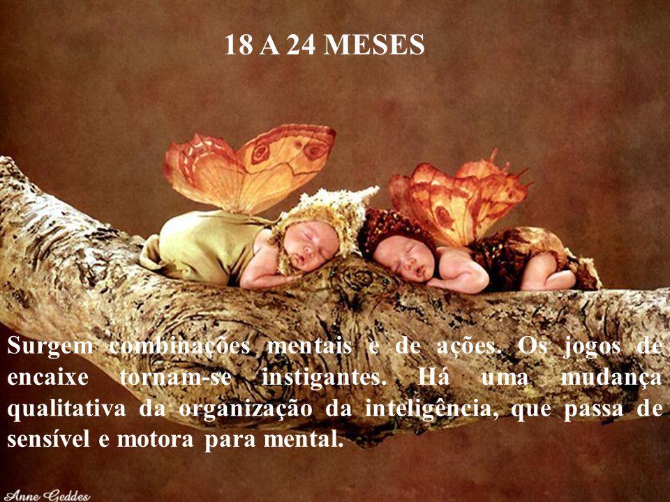 18 A 24 MESES
