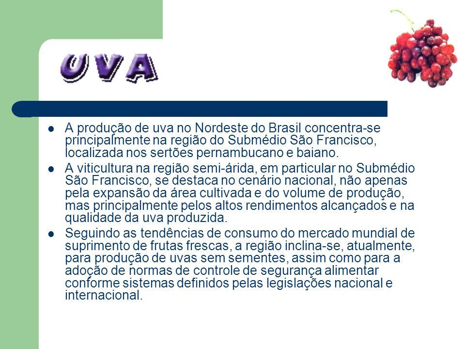 A produção de uva no Nordeste do Brasil concentra-se principalmente na região do Submédio São Francisco, localizada nos sertões pernambucano e baiano.