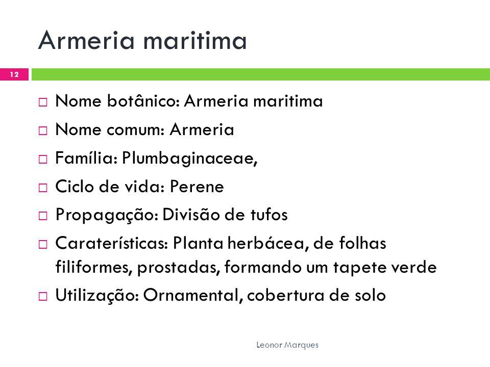 Armeria maritima Nome botânico: Armeria maritima Nome comum: Armeria