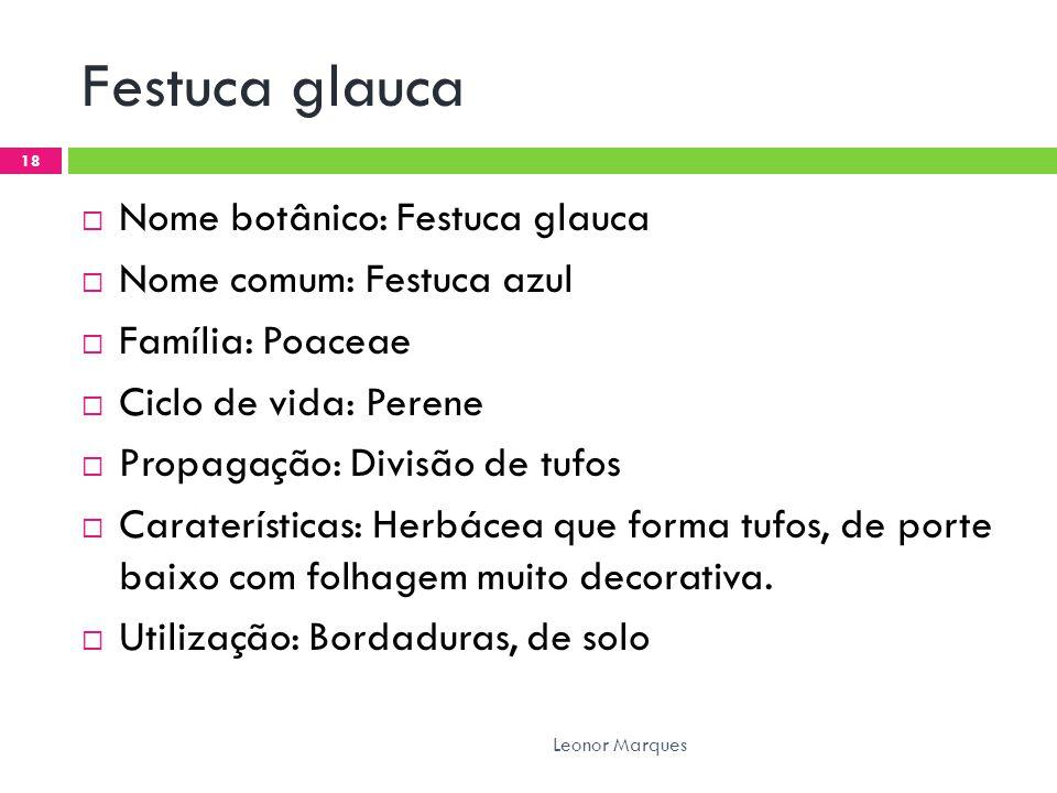 Festuca glauca Nome botânico: Festuca glauca Nome comum: Festuca azul