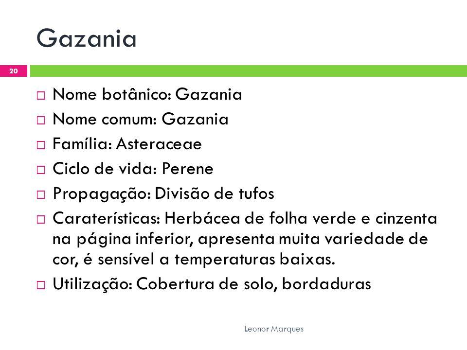 Gazania Nome botânico: Gazania Nome comum: Gazania Família: Asteraceae