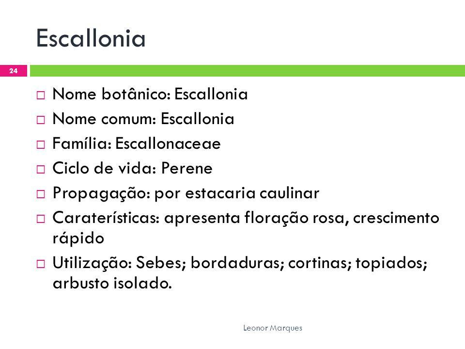 Escallonia Nome botânico: Escallonia Nome comum: Escallonia