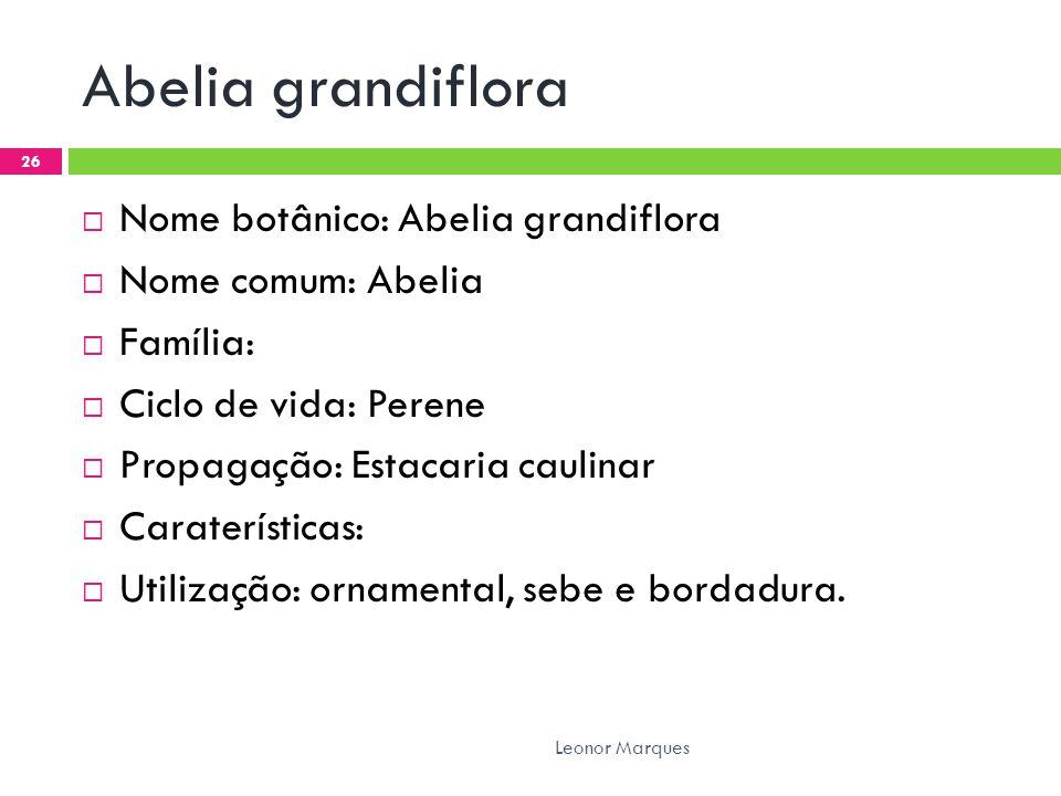 Abelia grandiflora Nome botânico: Abelia grandiflora