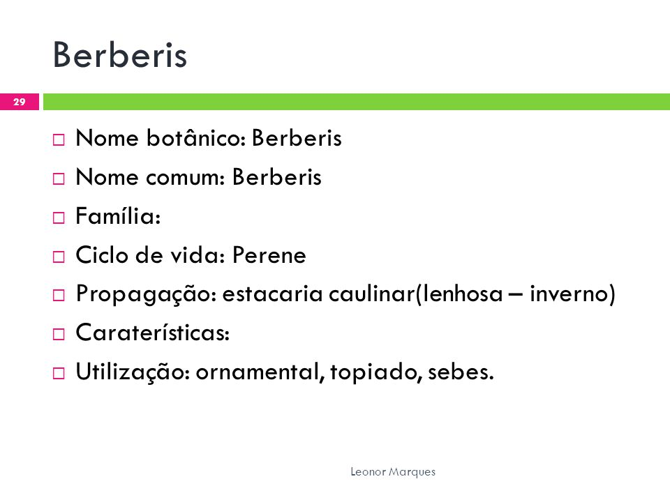 Berberis Nome botânico: Berberis Nome comum: Berberis Família:
