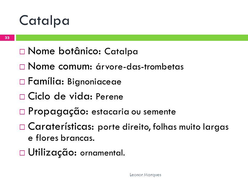 Catalpa Nome botânico: Catalpa Nome comum: árvore-das-trombetas