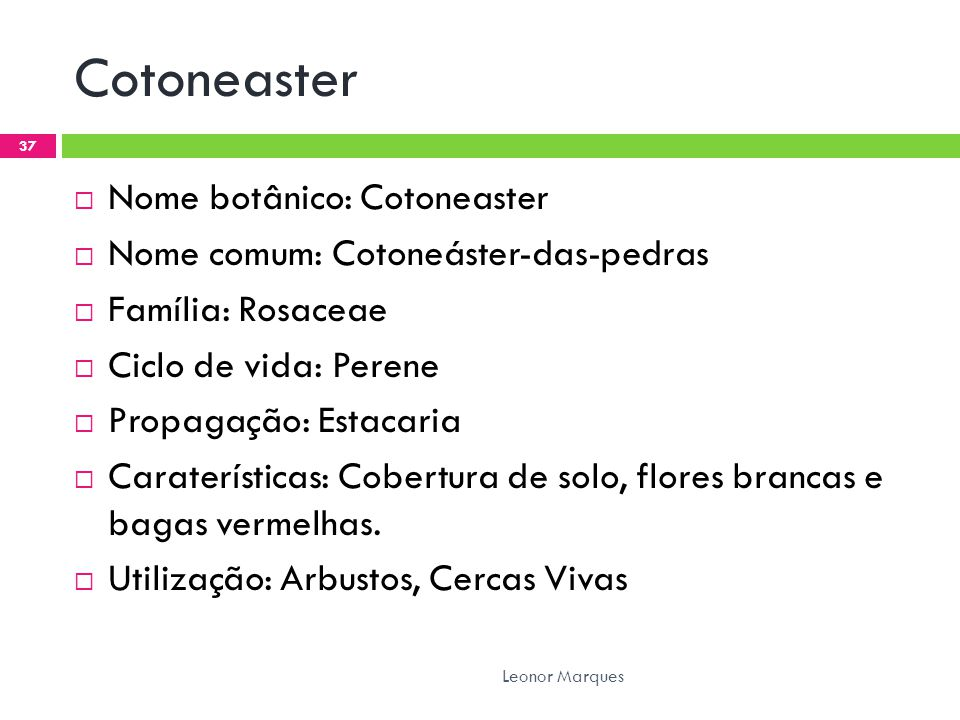 Cotoneaster Nome botânico: Cotoneaster