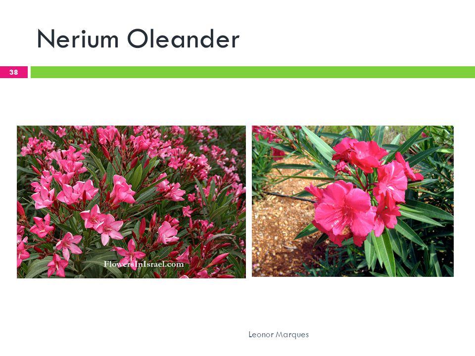 Nerium Oleander Leonor Marques