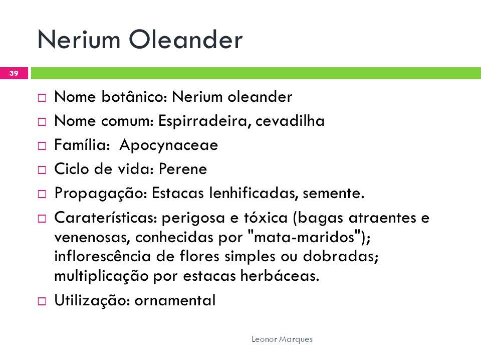 Nerium Oleander Nome botânico: Nerium oleander