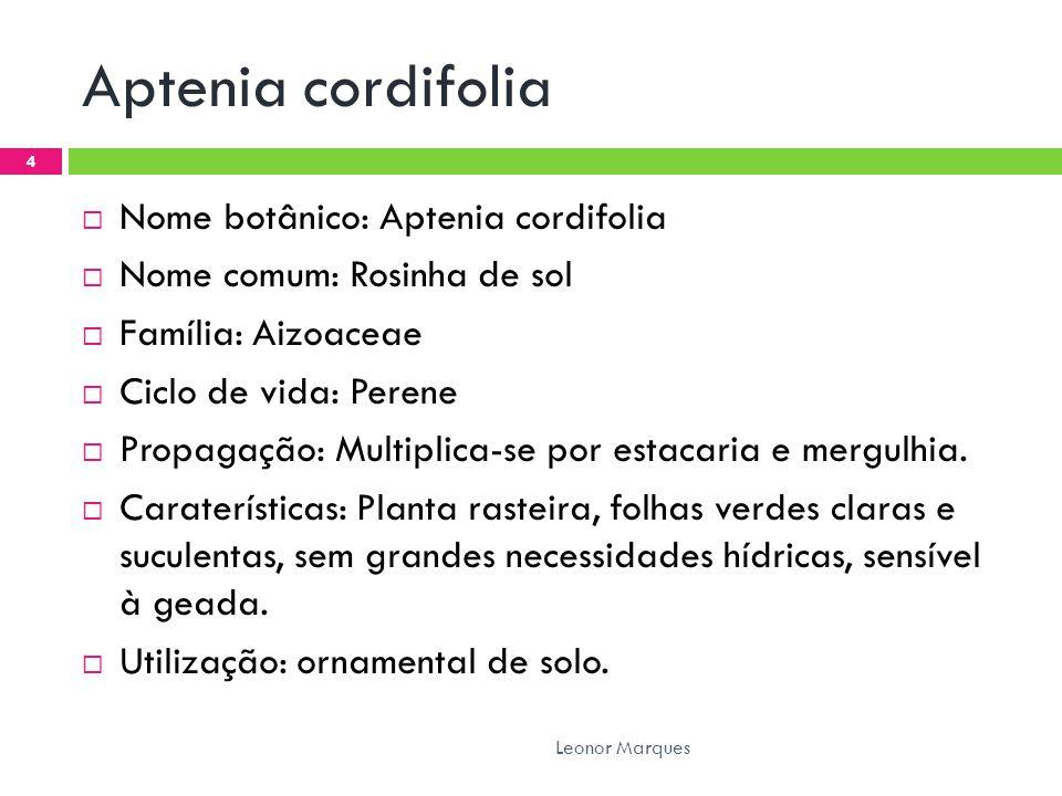 Aptenia cordifolia Nome botânico: Aptenia cordifolia