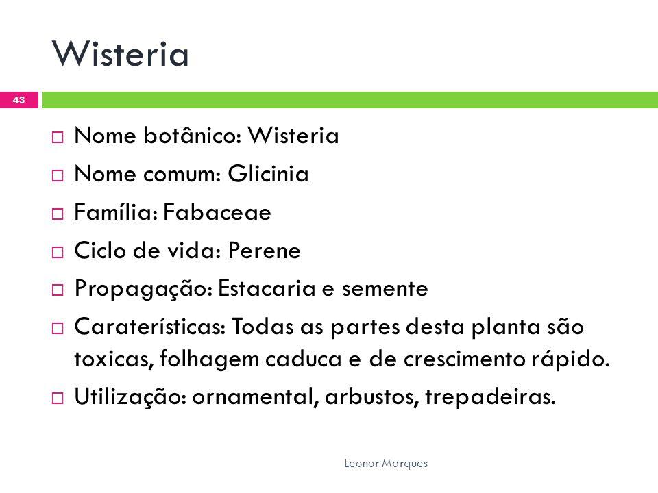 Wisteria Nome botânico: Wisteria Nome comum: Glicinia