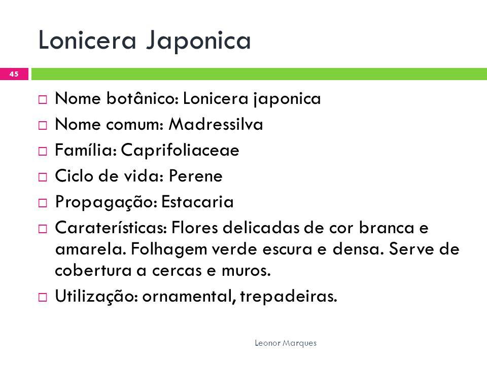 Lonicera Japonica Nome botânico: Lonicera japonica