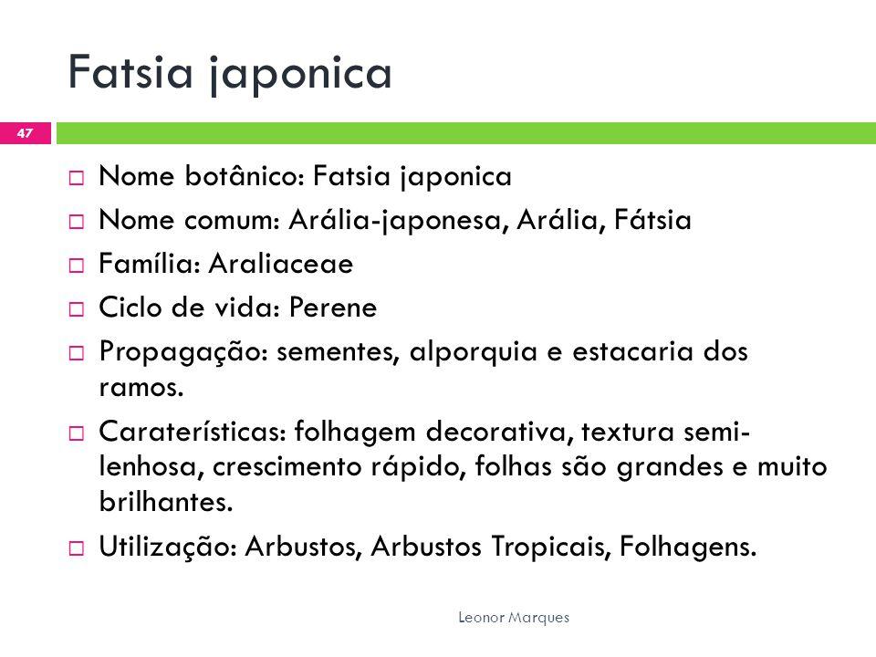 Fatsia japonica Nome botânico: Fatsia japonica