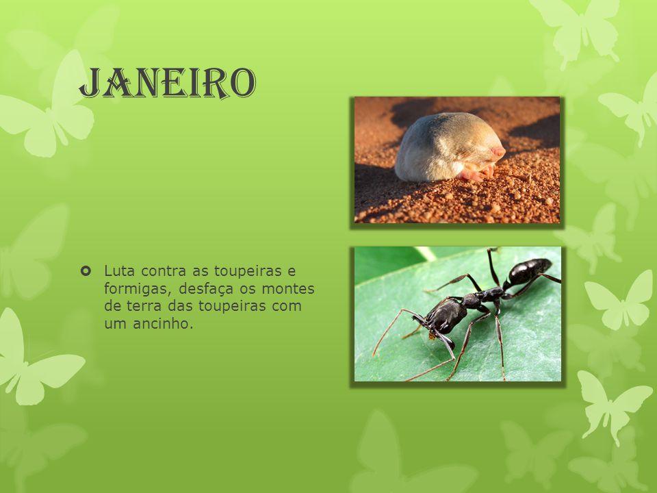 Janeiro Luta contra as toupeiras e formigas, desfaça os montes de terra das toupeiras com um ancinho.