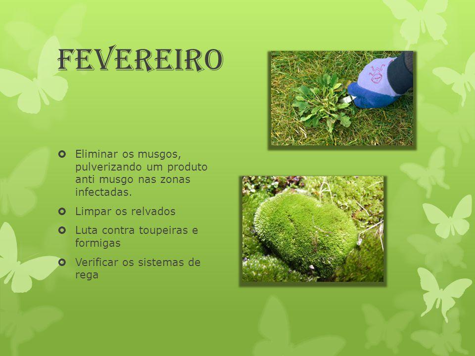 Fevereiro Eliminar os musgos, pulverizando um produto anti musgo nas zonas infectadas. Limpar os relvados.