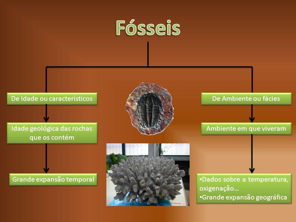 Fósseis De Idade ou característicos De Ambiente ou fácies
