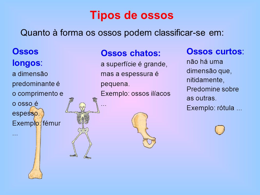 O corpo humano os ossos ppt carregar for O osso esterno e dividido em