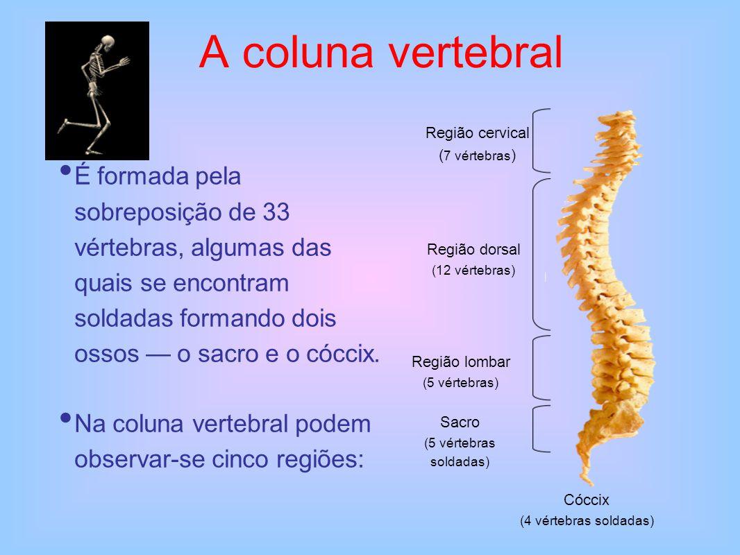 A coluna vertebral Região cervical. (7 vértebras)