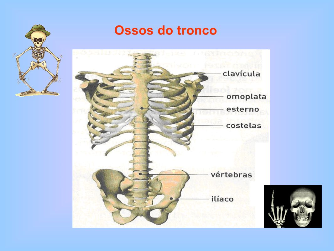 Ossos do tronco