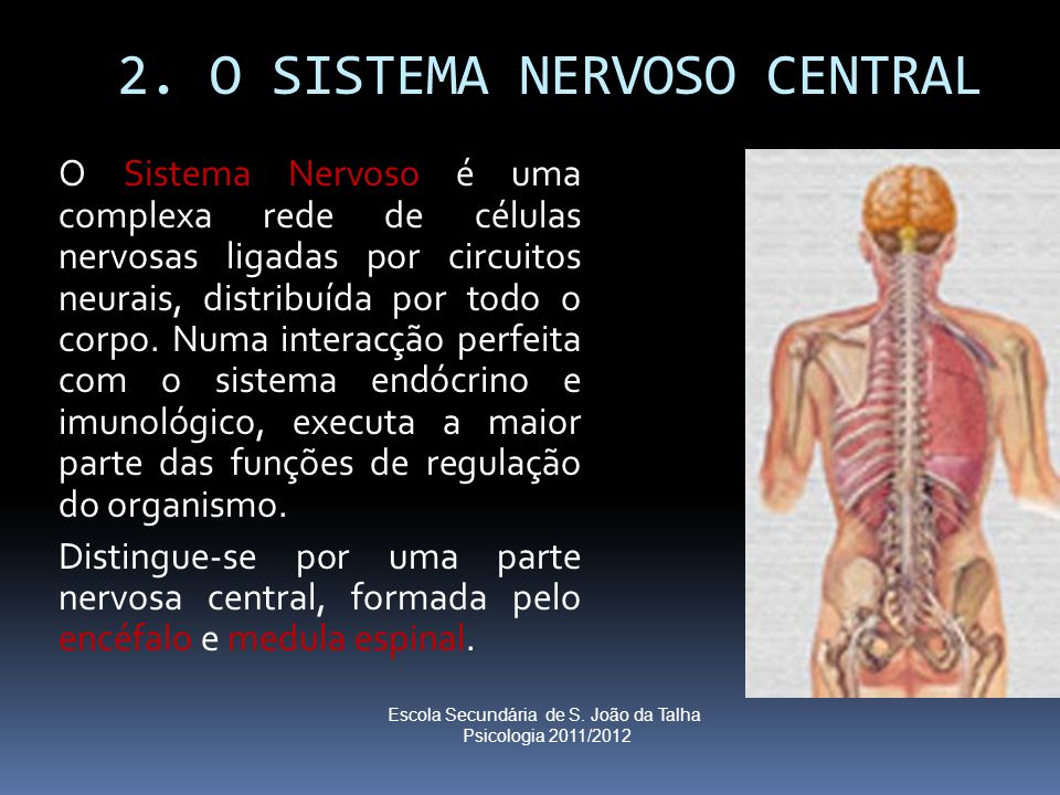 2. O SISTEMA NERVOSO CENTRAL