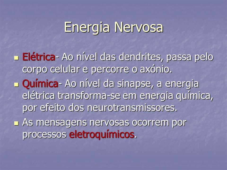 Energia Nervosa Elétrica- Ao nível das dendrites, passa pelo corpo celular e percorre o axónio.