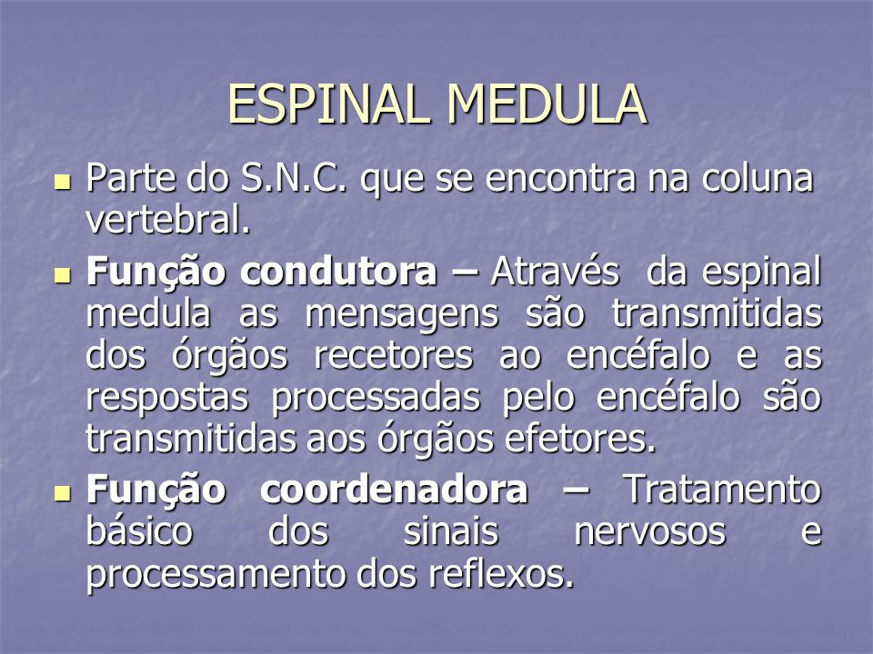 ESPINAL MEDULA Parte do S.N.C. que se encontra na coluna vertebral.