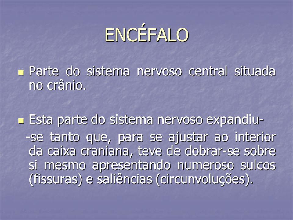 ENCÉFALO Parte do sistema nervoso central situada no crânio.