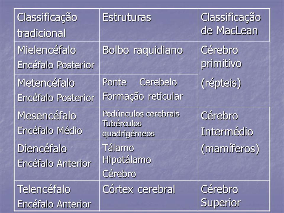 Classificação de MacLean Mielencéfalo Bolbo raquidiano
