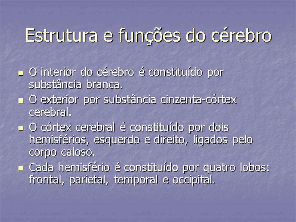 Estrutura e funções do cérebro