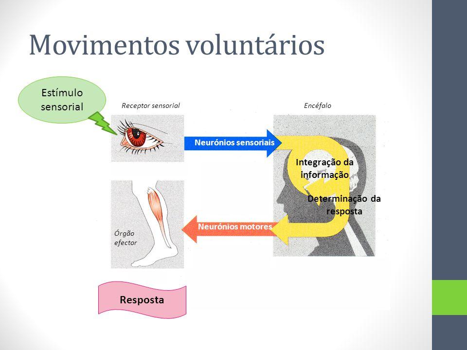 Movimentos voluntários