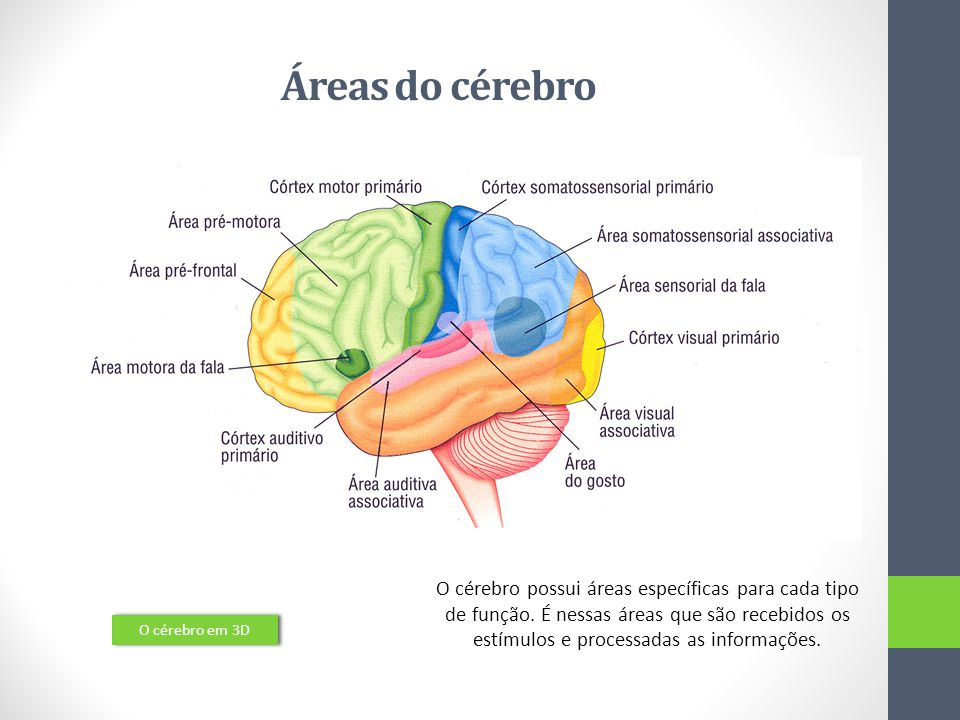 Áreas do cérebro