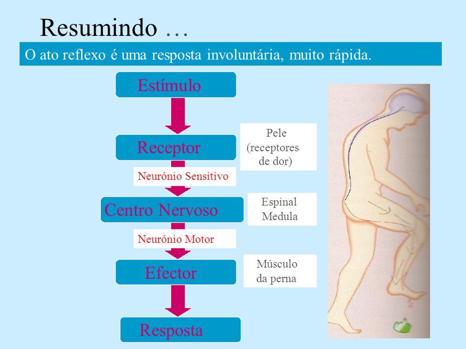 Pele Neurónio Sensitivo Centro Nervoso Neurónio Motor Resposta